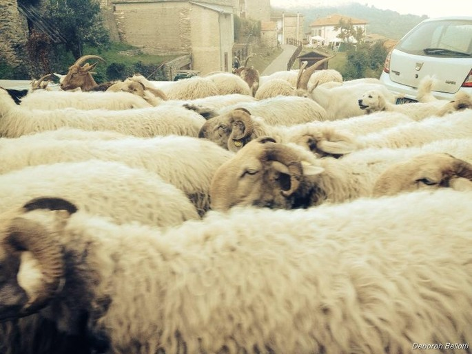 The Festival of Transhumance in the ancient hamlet of Mendatica