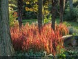 Garden Villa Bricherasio in Saluzzo, credit Facebook site