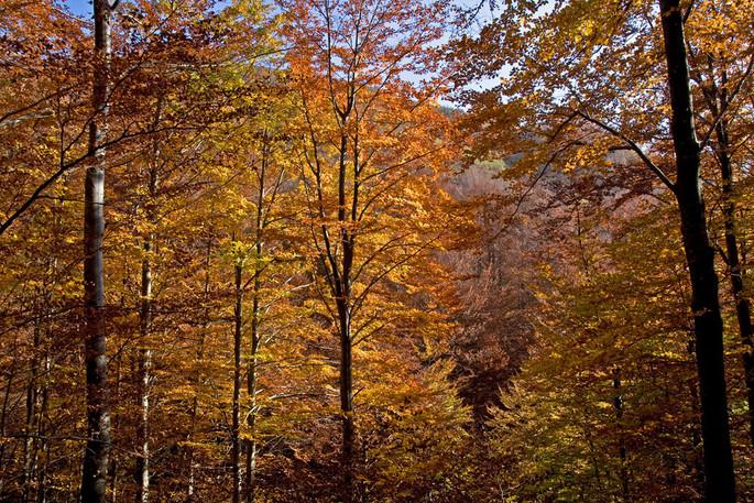 Credits: www.giorgioventurini.net