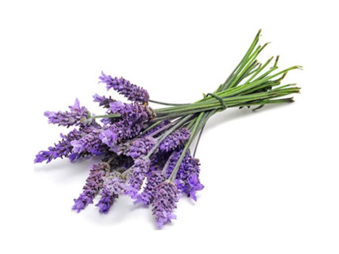 100 years of Lavender in Nava