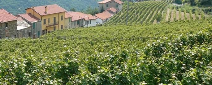 Asti Spumante, the aromatic sparkling wine par excellence