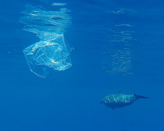 21 сентября в Монако - World CleanUp Day. День, посвященный окружающей среде