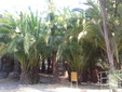 Winters Garten, Kredit Bettylella