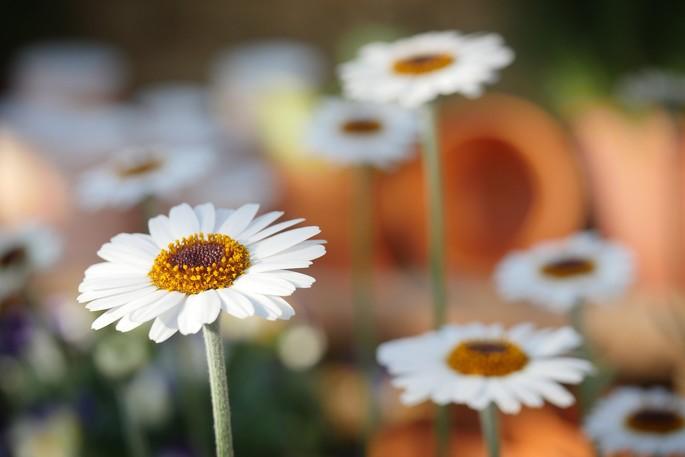 Idee per un viaggio: il turismo dei fiori