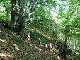 Palanfré woods, credits Facebook site