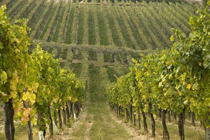"""В городке Чистерна-д'Асти, расположенном на холмах Монферрато и Роэро среди замков и виноградников, в самом сердце винодельческой зоны Terre Alfieri, вас ждет поместье """"Тенута Ла Пергола"""""""