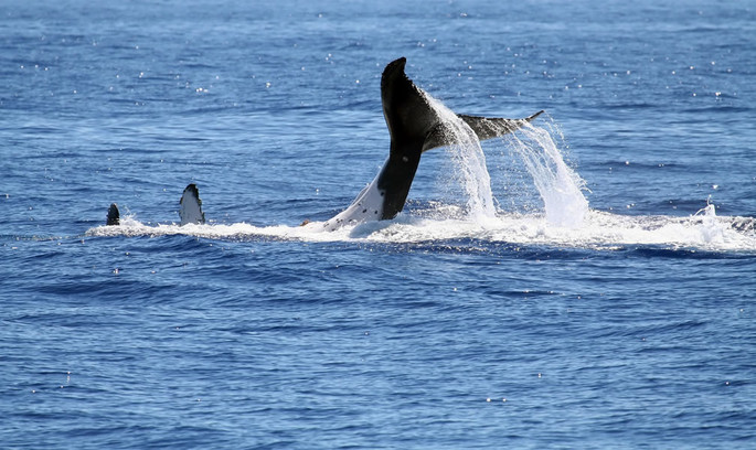 Whale watching expeditions in the Ligurian Sea!